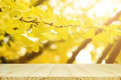 Perspective Wood Table And Fully Yellow Of Ginkgo Autumn Leaves W Stock Photo
