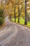 Perspectives de route en parc Portland OU photographie stock libre de droits