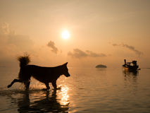 Perspectives silhouette of happy dog running in the sea at sunrise in summer time with long tail fishing boat reflect with water s Royalty Free Stock Photo