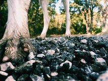 perspektiv på hundkapplöpningfot Fotografering för Bildbyråer