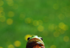 Perspektive des Frosches Stockfoto