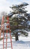 Perspektive - Leiter, die gegründet wird, um einen Baum zu trimmen Lizenzfreie Stockfotografie