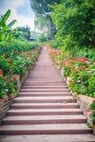 Perspektivenreihe der rosa und des Rotes blühenden Pelargonie blüht auf SID Lizenzfreie Stockfotos