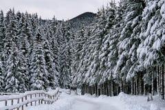 Perspektivische Verkürzung der schneebedeckten Hochebene Cansigl Lizenzfreie Stockfotos