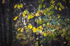 Perspektywiczny widok na pomarańczowych liściach Fotografia Stock