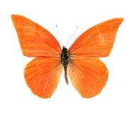 Perspicua di zarinda di zarinda di Appias della farfalla Fotografie Stock