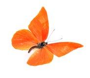 Perspicua di zarinda di zarinda di Appias della farfalla Immagini Stock Libere da Diritti