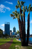 Perth Cityscape & Swan River. Perth City Scape with running tracks along the Swan River,with a palm in front Stock Photos