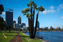 Perth Cityscape & Swan River. Perth City Scape with running tracks along the Swan River,with a palm in front Stock Images