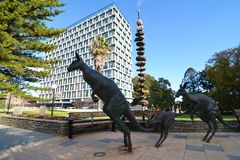 Perth Council House and kangaroos. A wide angle shot of Perth Council House with bronze kangaroos in the foreground. Western Australia stock images