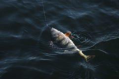 pertica in acqua fotografia stock