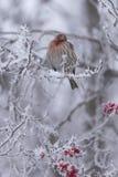 Pertica di inverno II fotografia stock