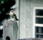 Pertiche dell'uccello sul recinto con alimento Immagine Stock