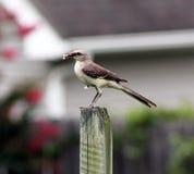 Pertiche dell'uccello sul recinto con alimento Fotografie Stock Libere da Diritti