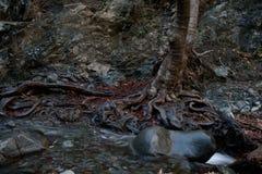 Perto da cachoeira de Millomeris Foto de Stock Royalty Free