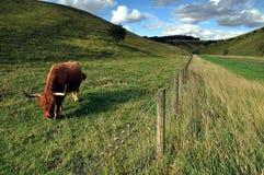 Perto de Sledmere Yorkshire do leste Inglaterra Fotos de Stock