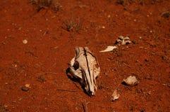 Perto de Tilpa Novo Gales do Sul Imagem de Stock