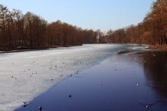 Perto de uma floresta congelada do lago na mola adiantada fotos de stock royalty free