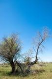 Perto do deserto Deserto Foto de Stock