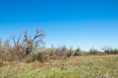 Perto do deserto Deserto Imagem de Stock Royalty Free