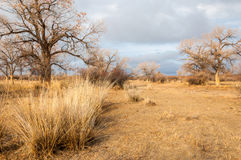 Perto do deserto Deserto steppe Fotos de Stock Royalty Free