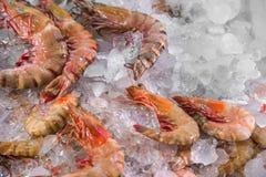 Perto veja acima camarões crus frescos no gelo na loja da loja do mercado dos pescadores fotografia de stock