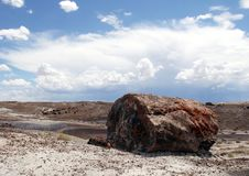 Pertrified log in the Arizona Desert. Petrified log laying in the Painted Desert of Arizona royalty free stock photo