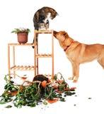 Perturbadores del perro y del gato Foto de archivo