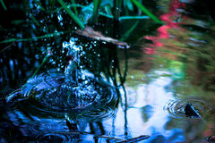 Perturbando a água Fotografia de Stock