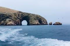 Peru, Ámérica do Sul, costa na reserva nacional de Paracas, Galápagos peruanos. imagem de stock royalty free
