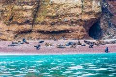 Peru, Ameryka Południowa, wybrzeże przy Paracas Krajową rezerwacją, Peruwiański Galapagos Zdjęcia Royalty Free