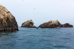 Peru, Ameryka Południowa, wybrzeże przy Paracas Krajową rezerwacją, Peruwiański Galapagos. Obrazy Royalty Free