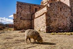 Peru Andes Sheep davanti ad una chiesa fotografia stock