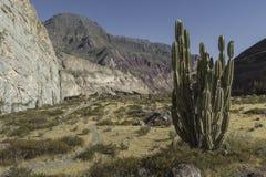 Peru Cotahuasi kanjon Den djupaste kanjonen för wolds Royaltyfri Fotografi