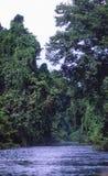 Peru: Floresta úmida grossa perto da cidade de Iquitos no Amazonas fotografia de stock royalty free