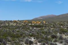 Peru góra Zdjęcie Stock