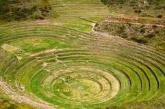 Peru, laboratório da agricultura dos Incas Fotografia de Stock Royalty Free