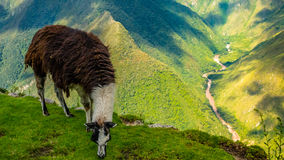 Peru landscape nature fields lama stock photography