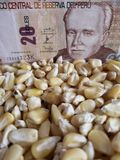 Peru, maize producing country, dry corn grains and peruvian banknote of twenty soles. Yellow edible seed, agriculture and harvest, world cereal production stock photography