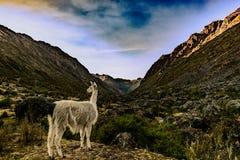 Peru nos Andes Fotografia de Stock