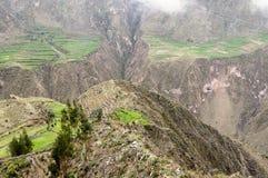 Peru, Toerist in de canion Cotahuasi Royalty-vrije Stock Afbeeldingen