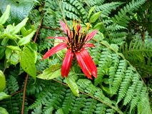 Peruana nica ³ amazà флоры Стоковые Изображения RF