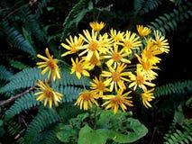 Peruana van flora amazà nica ³ Royalty-vrije Stock Foto's
