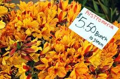 Peruanische Lilien Stockbild
