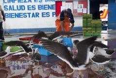 Peruanischer Fischer in einem Kopffüßerstall in Pucusana-Pier an einem bewölkten Morgen in der touristischen Stadt von Pucusana n stockfoto