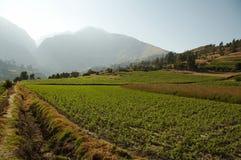 Peruanisches landwirtschaftliches Stockfotografie