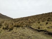 Peruanos dell'en los le Ande di Pajonal fotografia stock