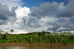 Peruanska Amazonas, Maranon flodliggande Arkivbild