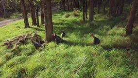 Perus selvagens em Forest At Autumn Sunset, 4k filme