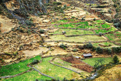 Peruviaans bergdorp stock foto's